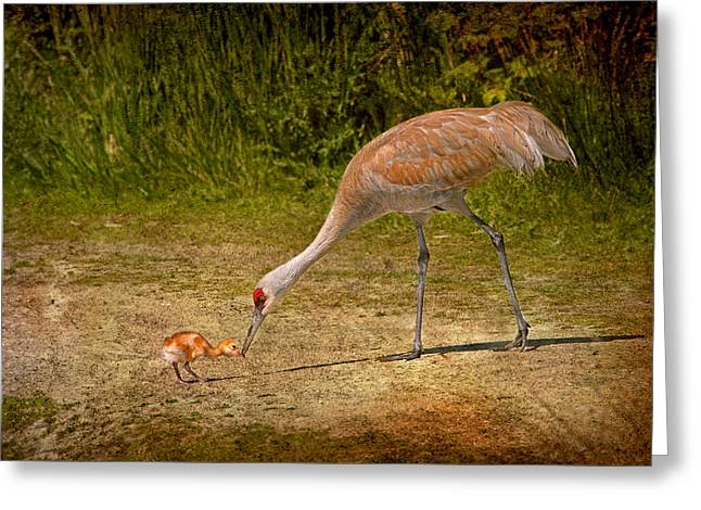 Sandhill Crane Mother And Baby Greeting Card by Peggy Collins
