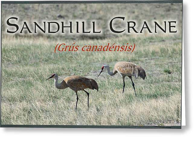 Sandhill Crane Poster Greeting Card