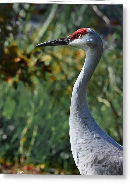 Sandhill Crane Profile Greeting Card by DigiArt Diaries by Vicky B Fuller