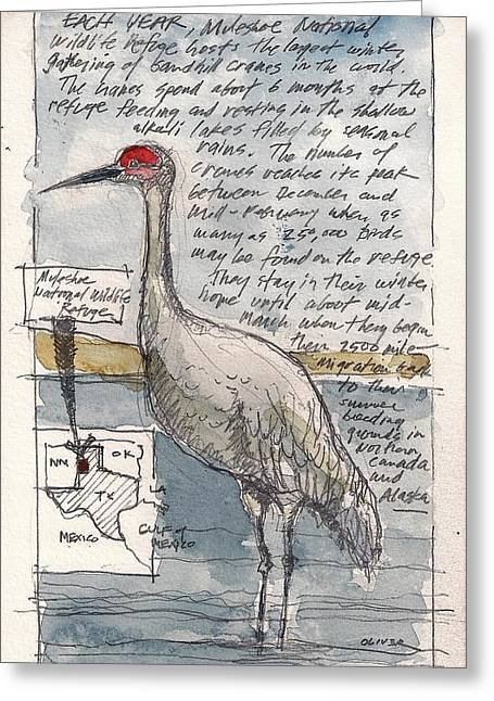 Sandhill Crane Greeting Card by Tim Oliver