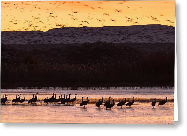 Sandhill Cranes And Other Waterfowl Greeting Card