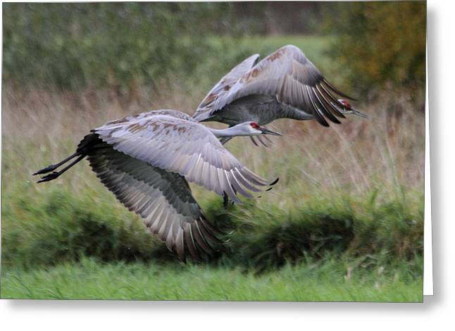 Sandhill Cranes Greeting Card by Angie Vogel