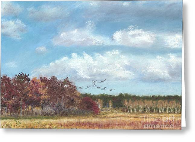 Sandhill Cranes At Crex With Birch  Greeting Card