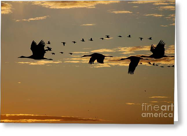 Sandhill Cranes At Sunset Greeting Card
