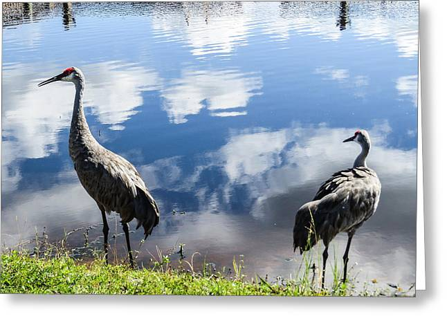 Sandhill Cranes At The Lake II Greeting Card by Zina Stromberg