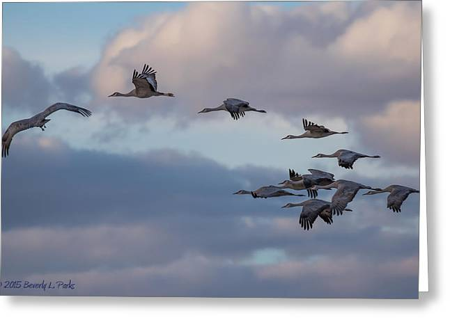 Sandhill Cranes Greeting Card