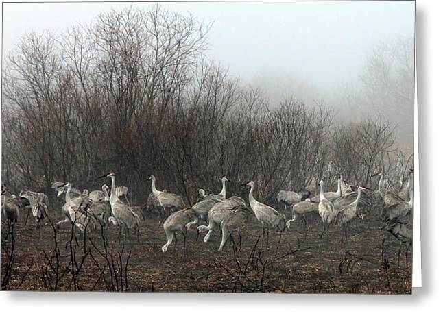 Sandhill Cranes In The Fog Greeting Card