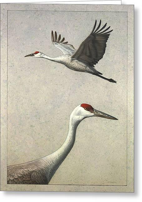 Sandhill Cranes Greeting Card by James W Johnson
