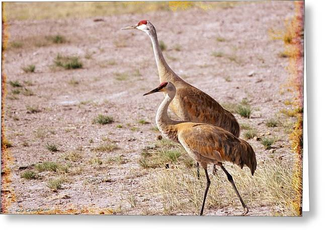 Sandhill Cranes Greeting Card by Kae Cheatham