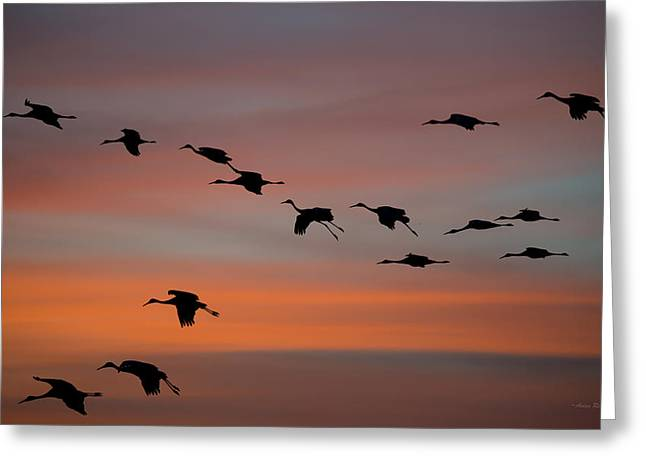 Sandhill Cranes Landing At Sunset Greeting Card