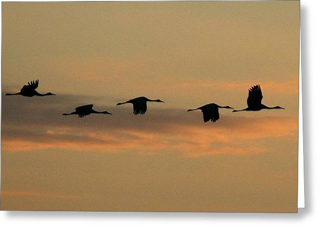 Sandhill Cranes Over Horicon Marsh Greeting Card