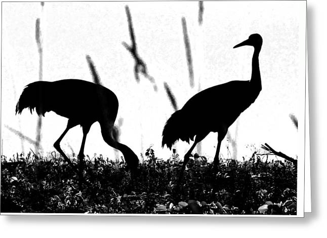 Sandhill Cranes In Silhouette Greeting Card