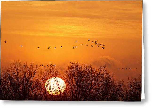 Sandhill Cranes Silhouetted Aginst Greeting Card by Chuck Haney