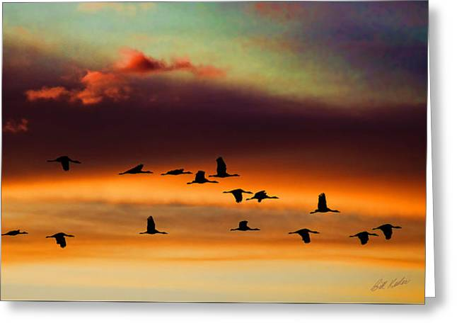 Sandhill Cranes Take The Sunset Flight Greeting Card by Bill Kesler