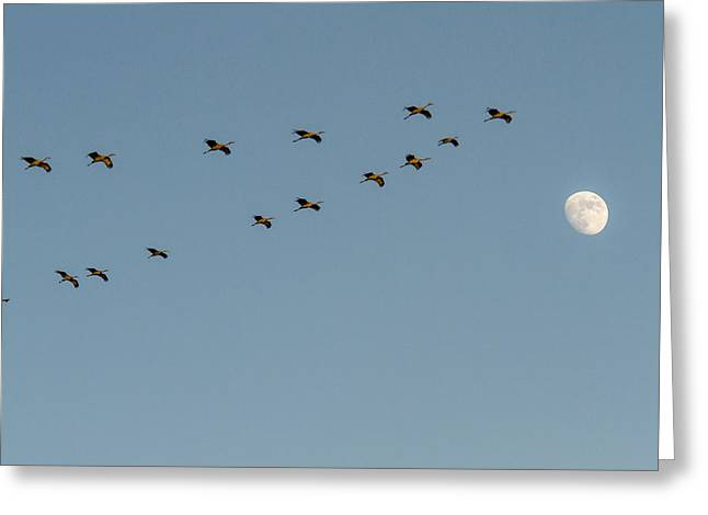 Sandhill Cranes With Moon Greeting Card by Jean Noren