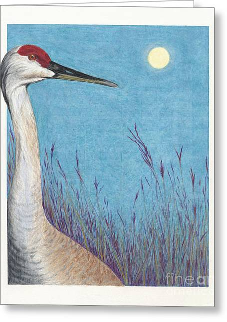 Sandhill Moonrise At Crex Meadows Greeting Card by Jymme Golden