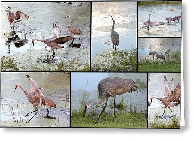 Sandhill Show Greeting Card by Carol Groenen