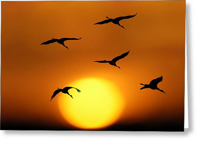 Sandhill Sunset Greeting Card