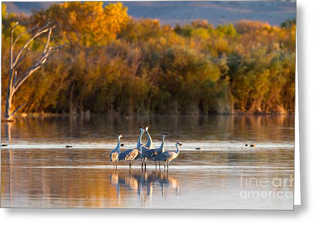 Six Sandhill Cranes Greeting Card