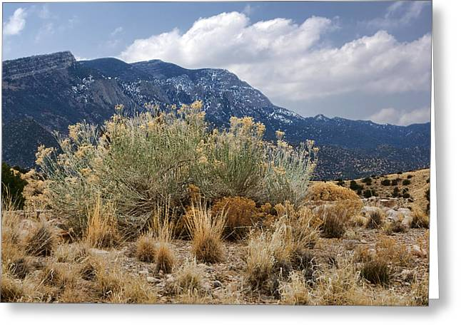 Sandia Sage Greeting Card by Nikolyn McDonald
