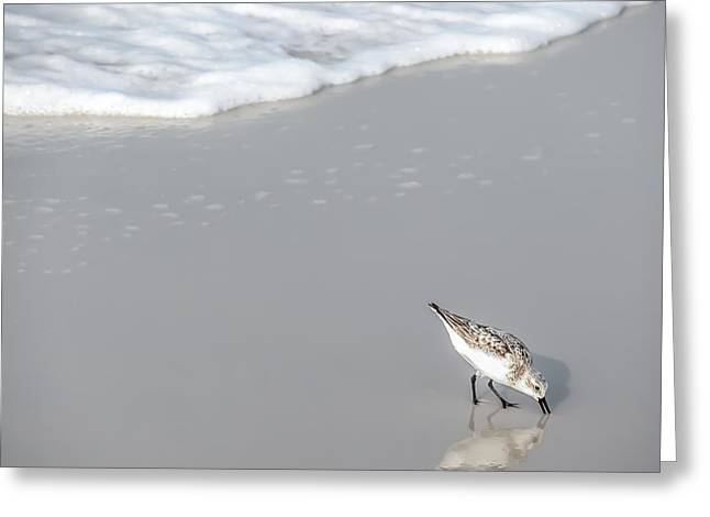 Sandpiper Greeting Card by CarolLMiller Photography