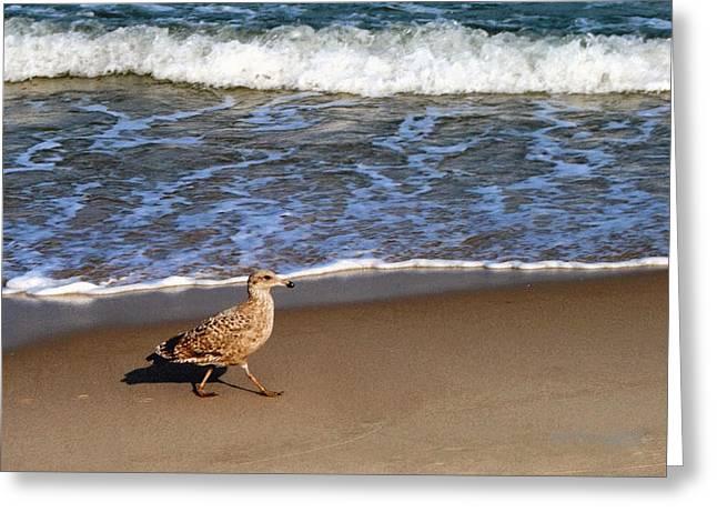 Sandpiper At Ortley Beach, Nj Greeting Card