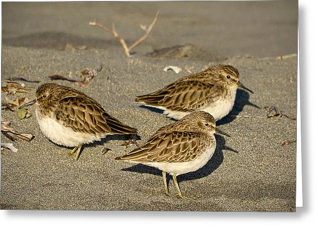 Greeting Card featuring the photograph Sandpiper Days by Jon Exley