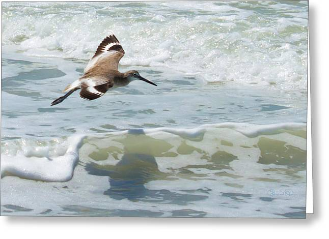 Sandpiper Flight Greeting Card