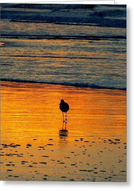 Sandpiper In Golden Dawn Surf Greeting Card by Cindy Croal