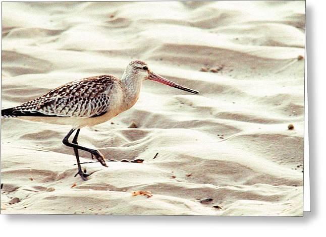 Sandpiper In Merimbula Greeting Card