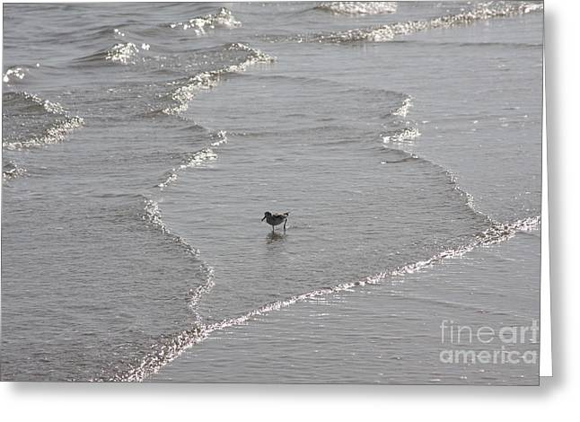 Sandpiper In Water Greeting Card by Jerry Bunger