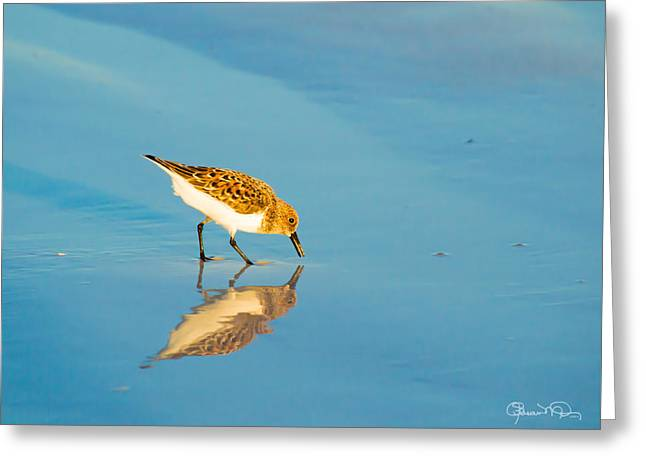 Sandpiper Mirror Greeting Card
