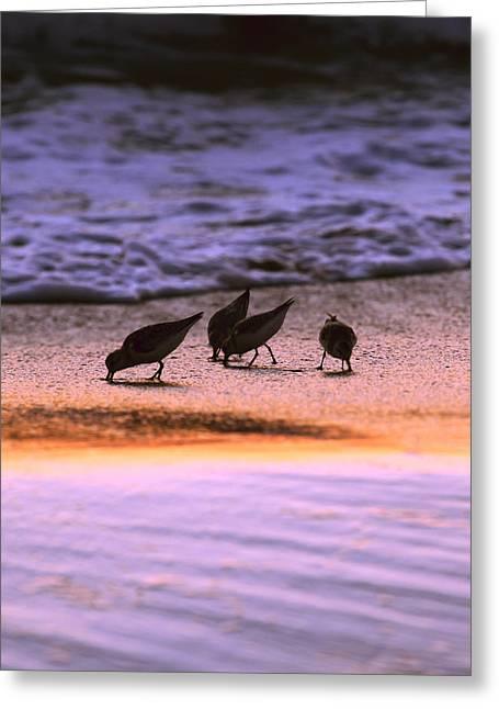 Sandpiper Morning Greeting Card