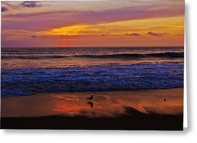 Greeting Card featuring the photograph Sandpiper On The Beach by John Harding