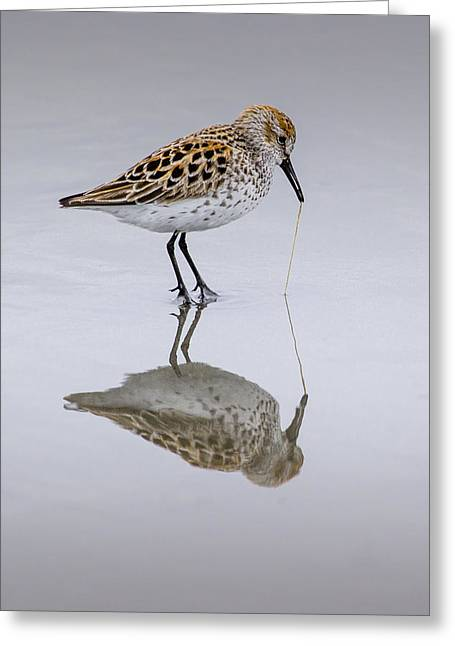 Sandpiper Pull Greeting Card by Sonya Lang