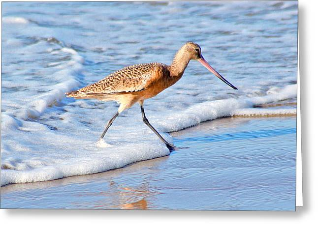 Sandpiper Stroll Greeting Card