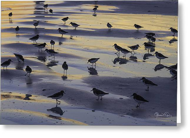 Sandpiper Sunset Convention Greeting Card