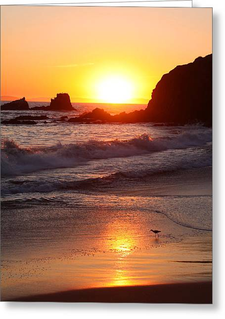 Sandpiper Sunset Greeting Card