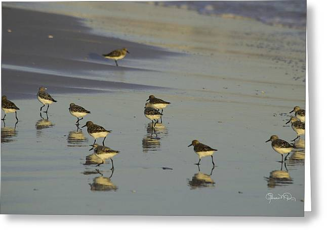 Sandpiper Sunset Reflection Greeting Card by Susan Molnar