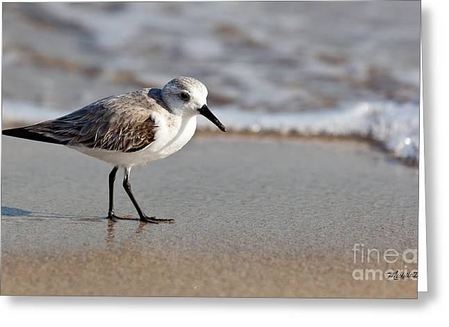 Sandpipers Secrets Greeting Card by Michelle Wiarda