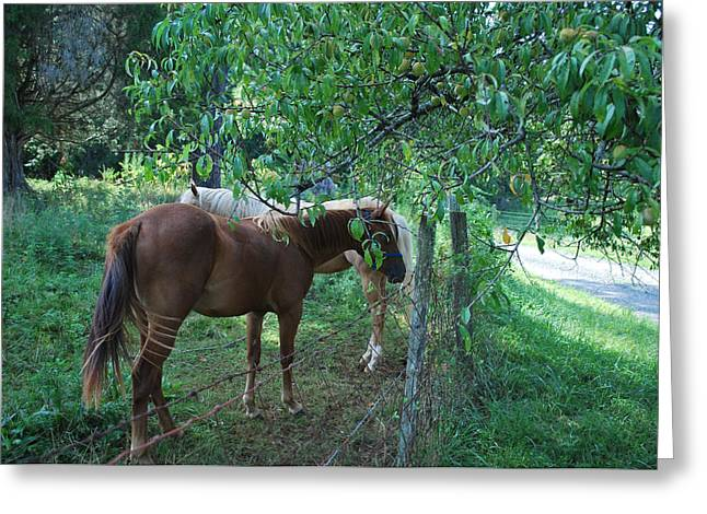 Sandy And Precious - C2903a Greeting Card by Paul Lyndon Phillips