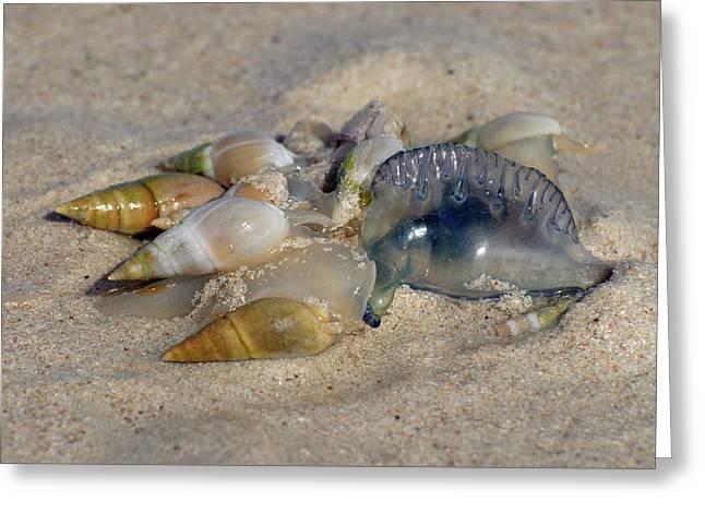 Sandy-beach Whelks Greeting Card