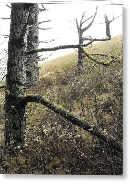 Sandy Hillside Greeting Card by Adria Trail