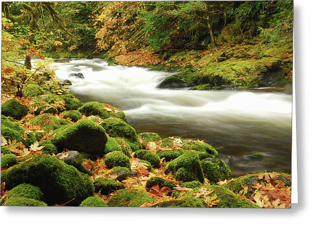 Sandy River In Autumn, Welches, Oregon Greeting Card