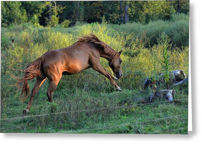 Sandy The Roan Cavorting  - C0094e Greeting Card by Paul Lyndon Phillips