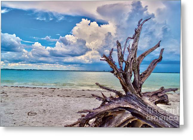 Sanibel Island Driftwood Greeting Card by Timothy Lowry