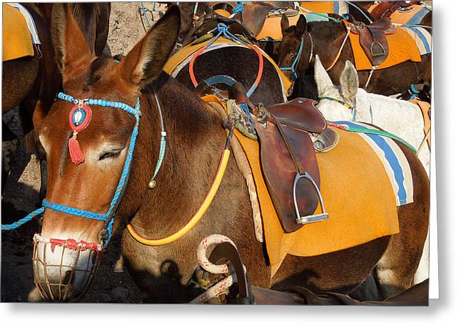 Greeting Card featuring the photograph Santorini Donkeys Ready For Work by Colette V Hera  Guggenheim