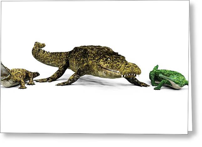 Sarcosuchus And Crocodiles Greeting Card by Walter Myers