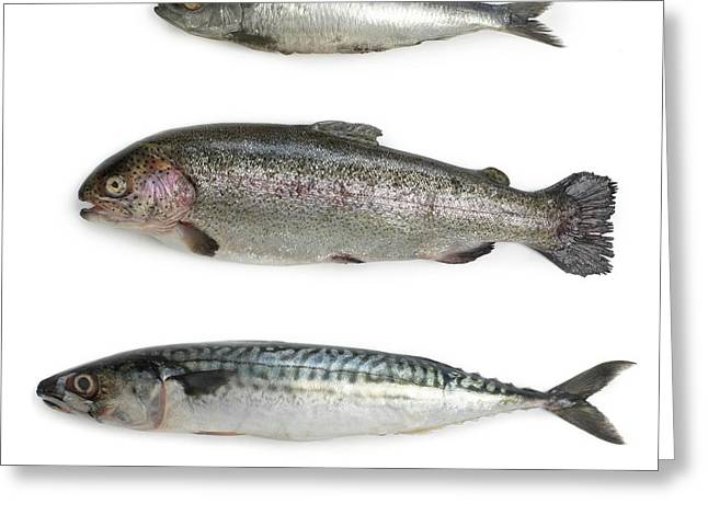 Sardine Greeting Card by Science Photo Library
