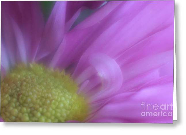 Greeting Card featuring the photograph Satiny Sheer by Mary Lou Chmura